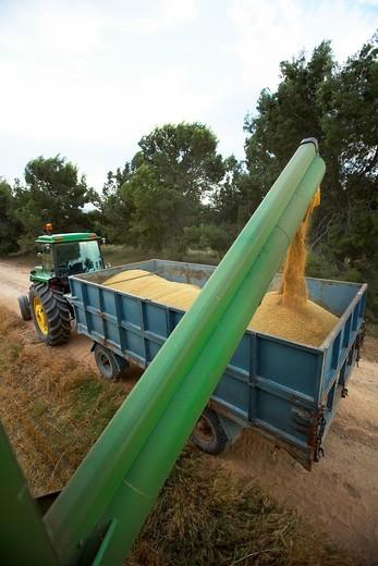 Stock Photo: 1566-598531 Reaping machine unloading wheat  LLeida  Spain