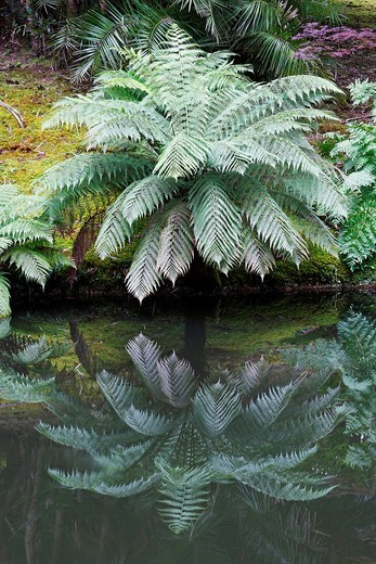Stock Photo: 1566-599623 Terra Nostra Park / Furnas / Sao Miguel Island / Azores / Portugal