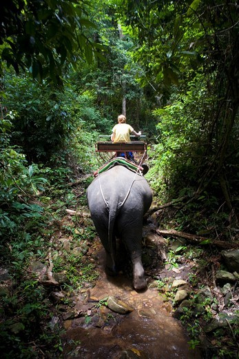 Stock Photo: 1566-600588 ASIA THAILAND KOH CHANG Frame of tall green trees and plantation with an elephant's back side and a rider sitting on its back while they are being lighted from sunlight that is coming from a hole at the top
