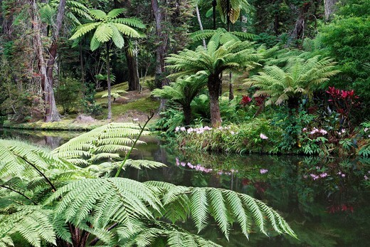 Stock Photo: 1566-600761 Terra Nostra Park / Furnas / Sao Miguel Island / Azores / Portugal