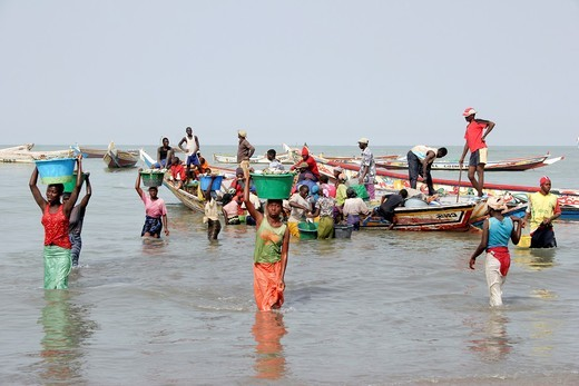Stock Photo: 1566-601266 African women carry big buckets full of fishes on their heads from the fishing boats to the coast and the fish market, Tanji Village, Tanji, Gambia, Africa