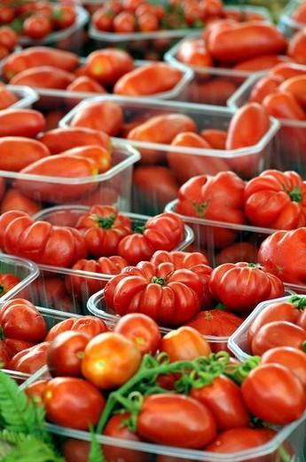 Stock Photo: 1566-603762 Tomatoes. Campo dei Fiori square market, Rome, Italy