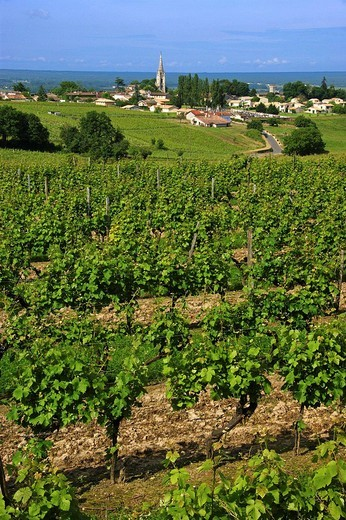 France. Gironde. Sainte Croix du Mont surrounded by vine fields, in the D.O. Saint Croix du Mont Bordeaux wine district. : Stock Photo