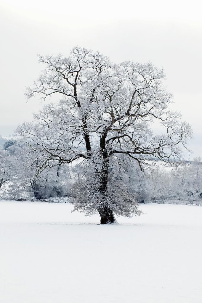 Winter scene - Herefordshire - England UK. : Stock Photo