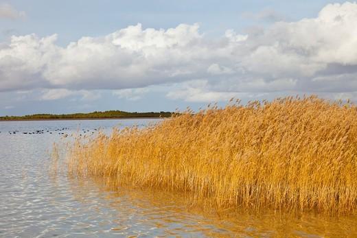 Stock Photo: 1566-611719 Big Lake, Villafranca de los Caballeros village, Toledo, Castilla La Mancha, Spain