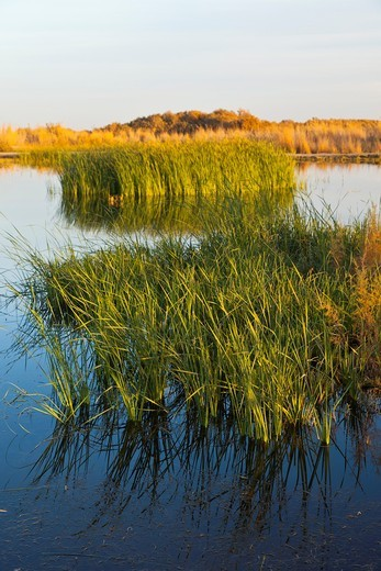 Azraq Wetlands Nature Reserve, Jordan, Middle East : Stock Photo