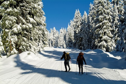 couple skiing at Hollyburn cross-country ski area, Cypress Mountain, West Vancouver, BC, Canada : Stock Photo