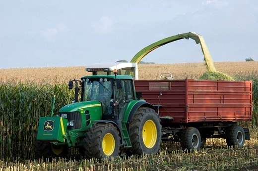 Stock Photo: 1566-616884 Fodder maize harvest  Transferring chaffed maize plants from harvester to truck  Schleswig-Holstein  Germany