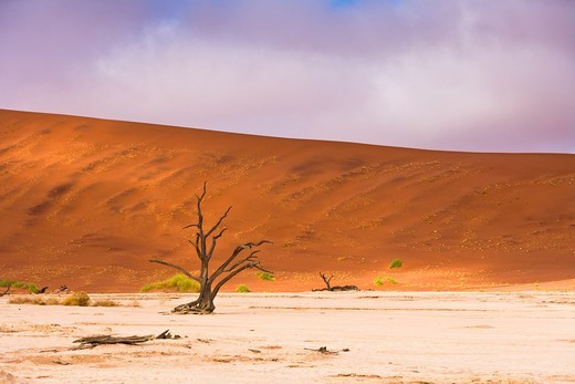 Dead tree in the Dead Vlei, Namib Naukluft Park, Namibia, Africa : Stock Photo