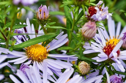 Stock Photo: 1566-628532 Wildflowers in bloom