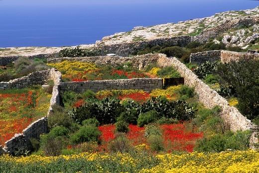 Stock Photo: 1566-628886 landscape around Dingli, Malta, Mediterranean Sea, Europe