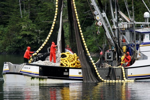 Stock Photo: 1566-633382 Purse-seiners operating in Red Bluff Bay, Baranof Island, Southeast Alaska These vessels are fishing for salmon