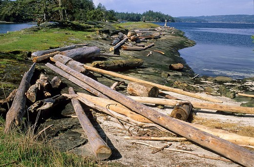 logs on beach, Pirates Cove Provincial ParkdeCourcey Island, British Columbia, Canada : Stock Photo