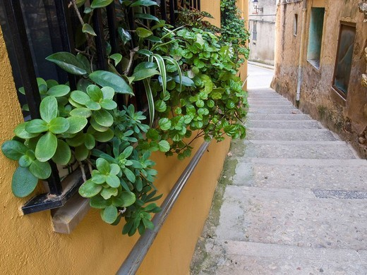 Windows decorated with plants at an alleyway in the Jewish Quarter in the old town of San Mateo. Baix Maestrat, Castellon province, Comunidad Valenciana, Spain : Stock Photo