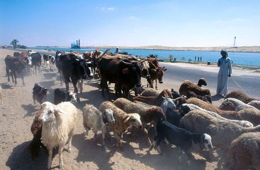 Stock Photo: 1566-648799 Along the Suez canal entrance, Mediterranean Sea. Egypt