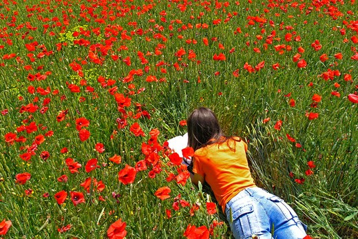 Woman lying on a poppies field : Stock Photo