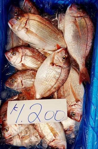 Sea bream, Tsukiji fish market, Tokyo, Japan. : Stock Photo