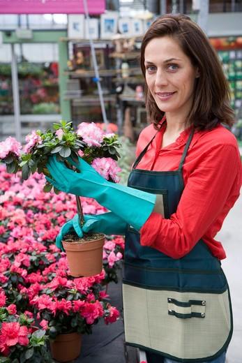 Stock Photo: 1566-650520 Gardener, pot with azalea. Garden, Tree nursery. Gipuzkoa, Euskadi. Spain.