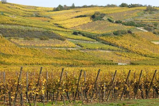 Alsace, France : Stock Photo