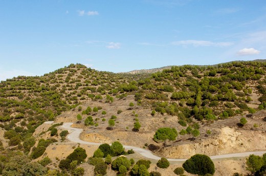 Stock Photo: 1566-675180 Sierra de Hornachuelos Natural Park. Cordoba province, Andalusia, Spain