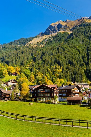 Stock Photo: 1566-675584 Wengen, Swiss Alps, Canton Bern, Switzerland