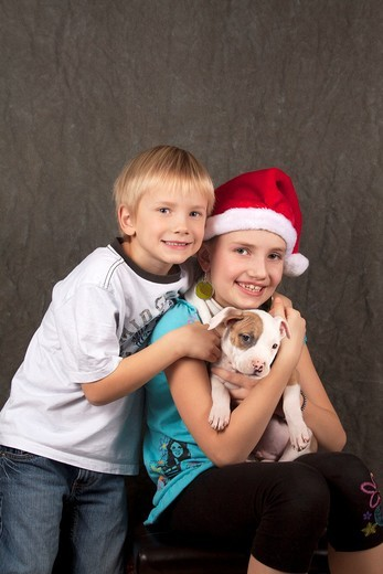 A brother and sister with their Pitbull puppy at Christmas : Stock Photo