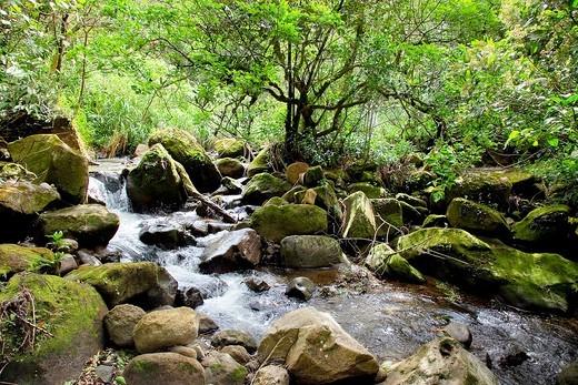 Arbol cuadrado forest, El Valle Antón, Panamá : Stock Photo