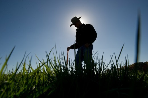 Stock Photo: 1566-683836 Farmer in the field