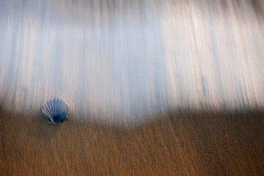 shell between waves on the beach : Stock Photo