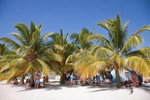 america, caribbean sea, hispaniola island, dominican republic, saona island, palms on the beach : Stock Photo
