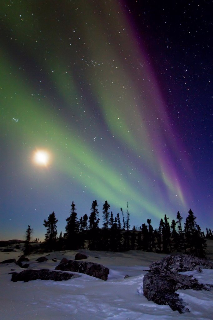 Stock Photo: 1566-687054 Aurora Borealis Northern Polar Lights and waxing moon over the boreal forest outside Yellowknife, Northwest Territories, Canada, MORE INFO The term aurora borealis was coined by Pierre Gassendi in 1621 from the Roman goddess of dawn, Aurora, and the Greek
