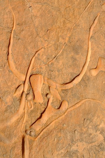 famous rock engraving of the crying cow, neolithic rockart near Djanet, Tassili n´ Ajjer National Park, Unesco World Heritage Site, Wilaya Illizi, Algeria, Sahara, North Africa : Stock Photo