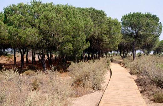 Stock Photo: 1566-690827 Footbridge in Doñana National Park. Huelva province. Spain