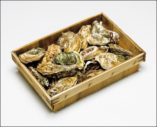 Oysters in a basket : Stock Photo
