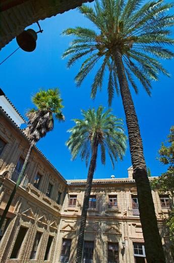 Stock Photo: 1566-704466 Patio, Cordoba  Andalusia, Spain