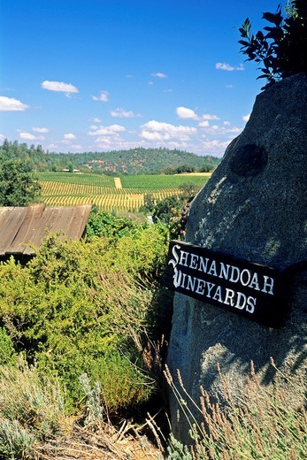 Shenandoah Vineyards, near Plymouth, Shenandoah Valley, Amador County, California : Stock Photo