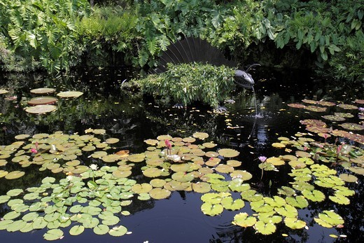 Stock Photo: 1566-715445 Florida, Miami, Coral Gables, Fairchild Tropical Botanic Garden, Artist in Bloom Exhibition, sculpture, art, pond, lily pad,