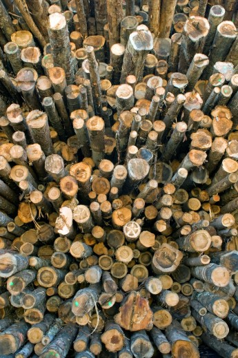 Stock Photo: 1566-717431 Huge pile of softwood logs at sawmill, Eureka, California