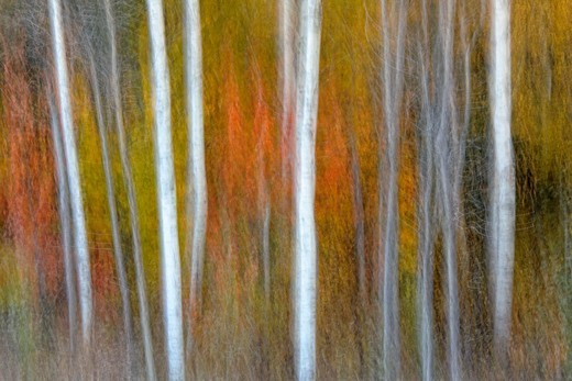Autumn trees Camera movement : Stock Photo