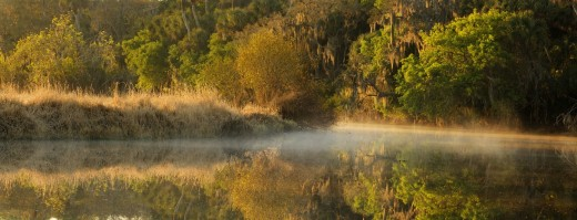 Stock Photo: 1566-717981 Myakka River at dawn Myakka River State Park, Florida