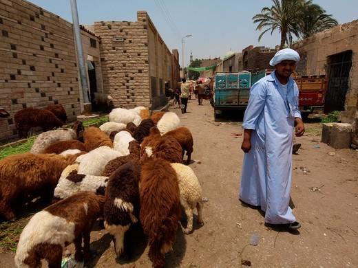 Stock Photo: 1566-720229 Animal´s section, Suk guma Friday´s market, Cairo, Egypt