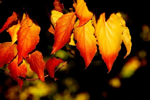 Sunlit leaves form a colorful group : Stock Photo