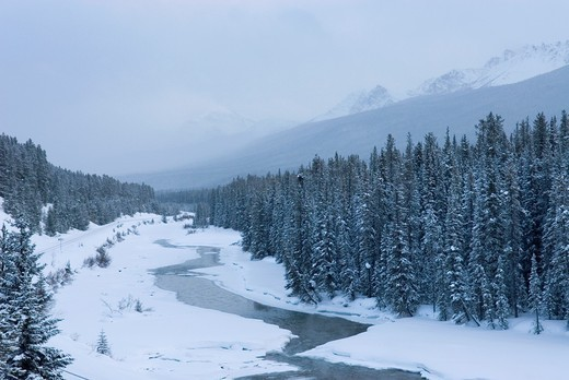 Stock Photo: 1566-726797 Bow River Valley, Banff National Park Alberta Canada