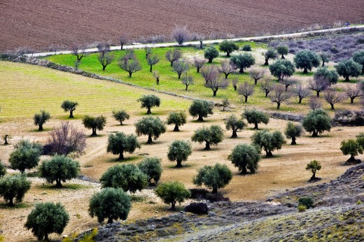 Roads in the fertile plain on Tajuña river Tielmes  Madrid Spain : Stock Photo