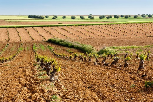 Stock Photo: 1566-732790 Field in Cabañas de Yepes  Toledo  Castilla la Mancha  Spain