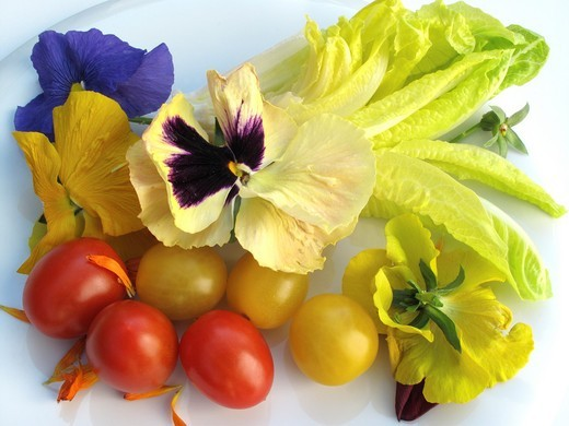 Stock Photo: 1566-738240 Flowers and tomato salad