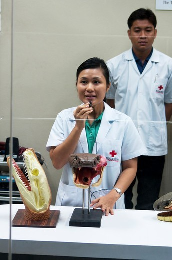 lecture on venom extraction at the snake farm in Thailand : Stock Photo