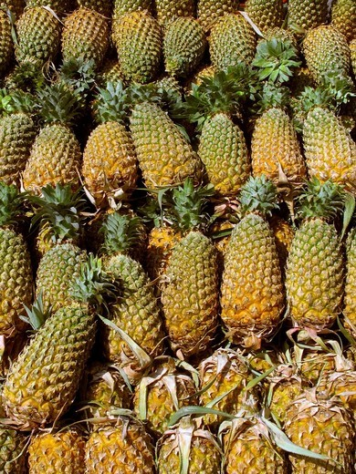 Pineapples, Ananas comosus, Bromeliaceae arranged at market for sell : Stock Photo