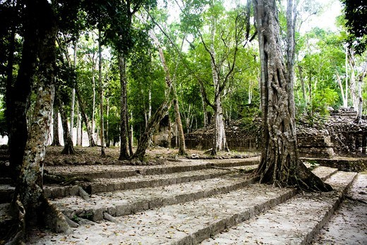 Calakmul archaeological site, Yucatan, Mexico : Stock Photo