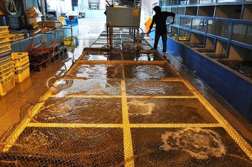 Hong Kong: alive fish at the fish market in Abardeen : Stock Photo